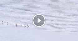 Stand Up Paddle racing video